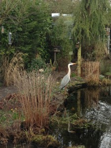 image1reiger tuin greet